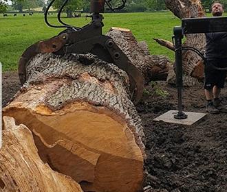 Tree Removal Bristol